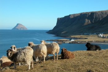 Faroe islands.jpg